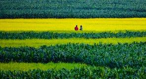 Verde & colore giallo immagini stock