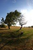 Verde contro gli alberi morti Immagine Stock