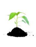Verde crescente e terreno della pianta Fotografia Stock