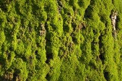Verde cubierto de musgo Fotos de archivo libres de regalías