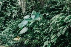 Verde-cupo della foresta tropicale immagini stock libere da diritti