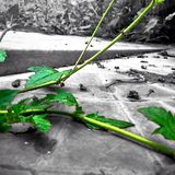 Verde da arte Imagem de Stock