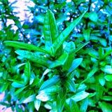 Verde da arte Foto de Stock