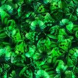 Verde 02 da borboleta ilustração stock