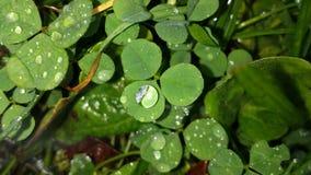 Verde da efervescência Imagens de Stock Royalty Free