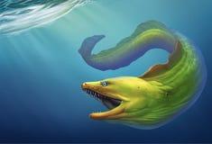 Verde da enguia de Moray Grande enguia de moray verde com boca aberta e fileira grossa dos dentes afiados das agulhas B ilustração royalty free