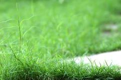 Verde da grama da mola?, fresco e saudável Fotografia de Stock