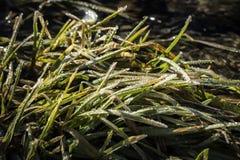 Verde da grama da mola?, fresco e saudável Fotos de Stock