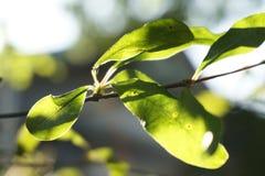 Verde da luz solar da manhã bruto imagens de stock