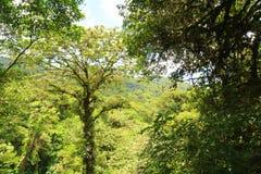 Verde da mola Imagem de Stock