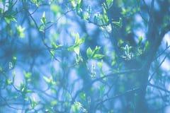 Verde da mola Imagens de Stock