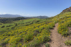 Verde da mola em Thousand Oaks Califórnia Fotos de Stock Royalty Free