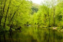 Verde da mola que reflete fora da água Fotografia de Stock Royalty Free