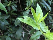 Verde da planta na noite imagens de stock royalty free