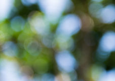 Verde dal bokeh di estate della natura per fondo immagini stock libere da diritti