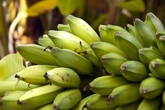 Verde das bananas imagens de stock