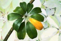 Verde das folhas e um amarelo foto de stock
