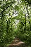 Verde de bosque Foto de archivo