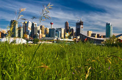 Verde de Calgary Imagens de Stock