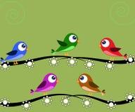Verde de cinco pájaros Fotos de archivo libres de regalías