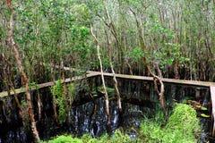 Verde de Eco, passagem através da floresta Imagem de Stock