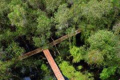Verde de Eco, passagem através da floresta Foto de Stock Royalty Free