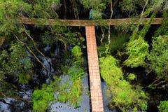 Verde de Eco, passagem através da floresta Imagens de Stock Royalty Free