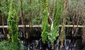 Verde de Eco, passagem através da floresta Imagens de Stock