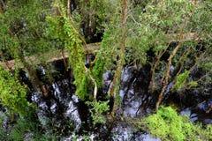 Verde de Eco, passagem através da floresta Fotografia de Stock Royalty Free