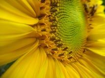 Verde de Fibonacci Imagem de Stock Royalty Free