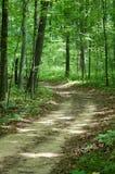 Verde de floresta Foto de Stock Royalty Free