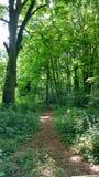 Verde de Forrest Imagen de archivo