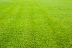 Verde de grama Imagens de Stock