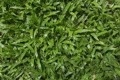 Verde de grama Fotos de Stock