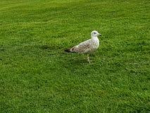 Verde de grama bonito do pássaro animal dos animais selvagens do pássaro Fotos de Stock