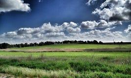 Verde de grama dos céus da estrada da árvore Fotografia de Stock Royalty Free