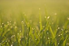 Verde de grama na manhã imagens de stock royalty free