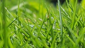 Verde de hierba Fotografía de archivo libre de regalías