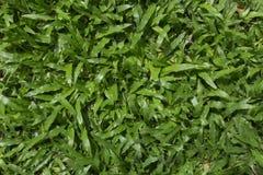 Verde de hierba fotos de archivo