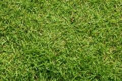 Verde de hierba Fotos de archivo libres de regalías