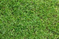 Verde de hierba Imagen de archivo