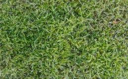 Verde de hierba Imagenes de archivo