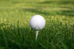 Verde de hierba de la te de la pelota de golf Imágenes de archivo libres de regalías