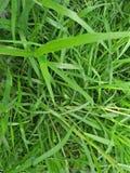 Verde de hierbas imagen de archivo libre de regalías
