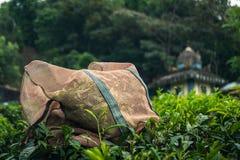 Verde de kerala india da planta??o de ch? de Munnar imagens de stock royalty free