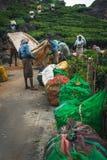 Verde de Kerala la India de la plantaci?n de t? de Munnar foto de archivo libre de regalías