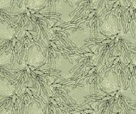 Verde de la alga marina del quelpo con la capa Imágenes de archivo libres de regalías