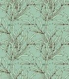 Verde de la alga marina del quelpo con textura Foto de archivo libre de regalías