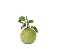 Verde de la cáscara de pomelo Fotos de archivo libres de regalías