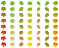 Verde de la caída de los grados del cambio del color de las hojas Imagen de archivo